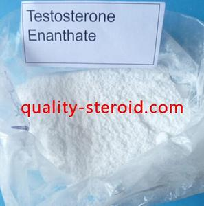 Testosterone enanthate Powder Steroid